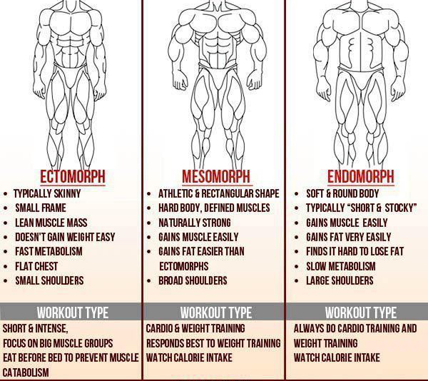 what you need to know about muscle building body types