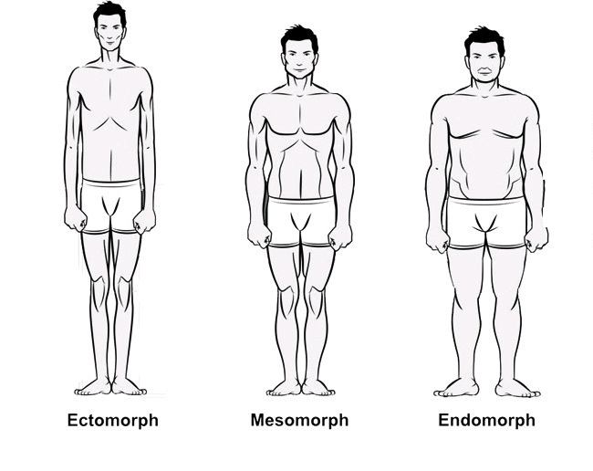 what body type is best for bodybuilding